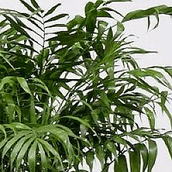 kennisartikel accessoires plant 3