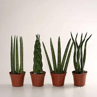 kennisartikel accessoires plant 4